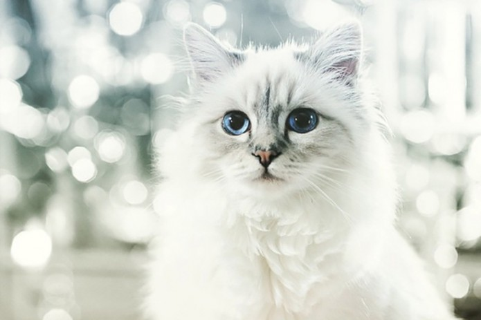 karl-lagerfelds-cat-made-425-million-usd-last-year-1