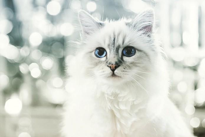 karl-lagerfelds-cat-made-425-million-usd-last-year-1