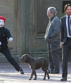 電影《John Wick 2》主演Keanu Reeves帶愛犬拍戲!