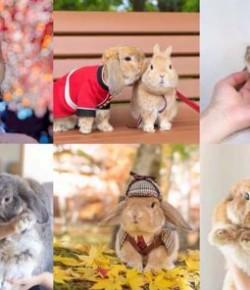 IG上最潮最萌兔子:Piu Piu