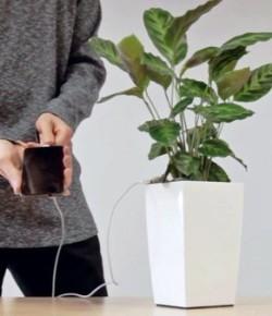 科技新發明|一棵盆栽就是充電寶:這也太拉風了吧!