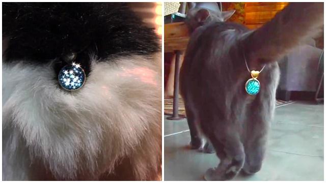 twinkle-tush-cat3